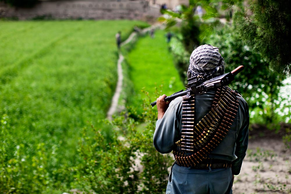 An Afghan Army soldiers looks over a poppy field in Nangarhar province.