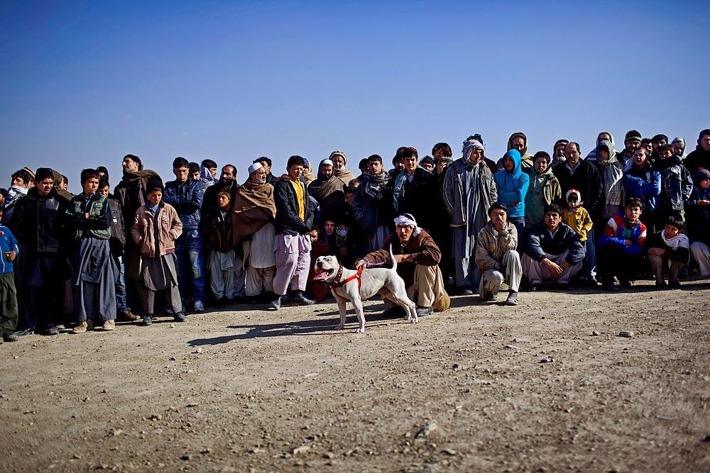 AfghanReduxWeb_0019