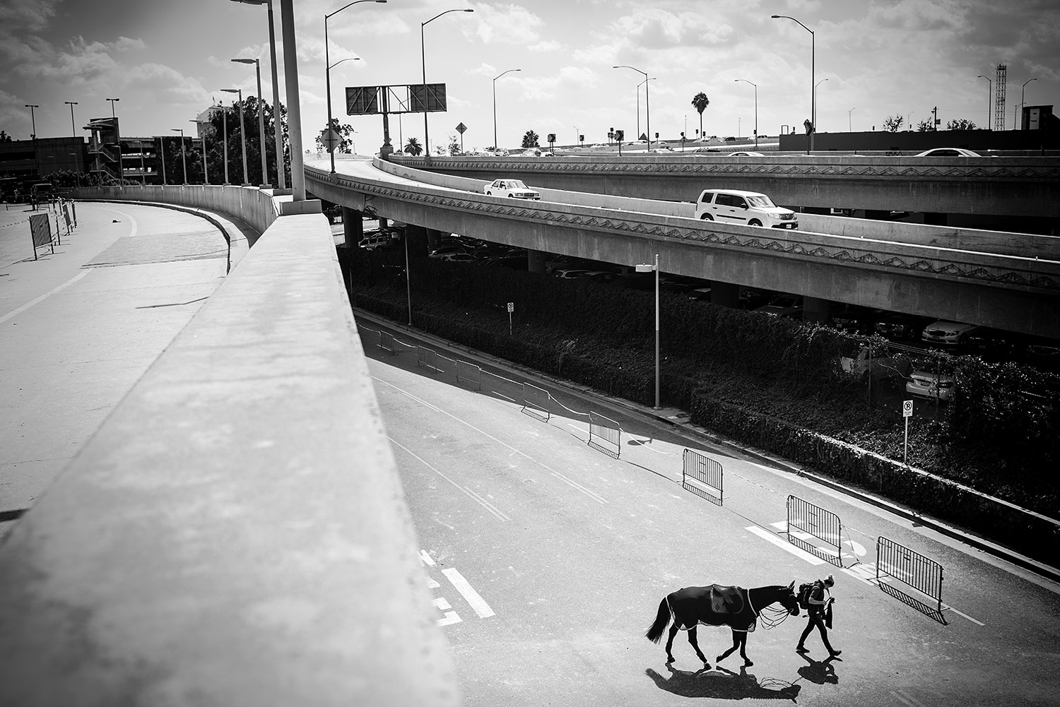 LOS ANGELES, CA - SEPTEMBER 28: A horse is walked from the parking lot to the main event space at the LA Convention Center. 2014's competition, the first major international equestrian event in L.A. since the 1984 Olympics, was held in more than 27,000 square feet of the Los Angeles Convention Center.