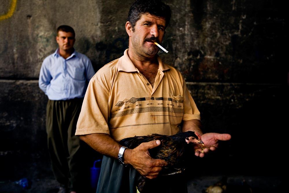 A man feeds his rooster before a cock fight in Sulaimaniya.