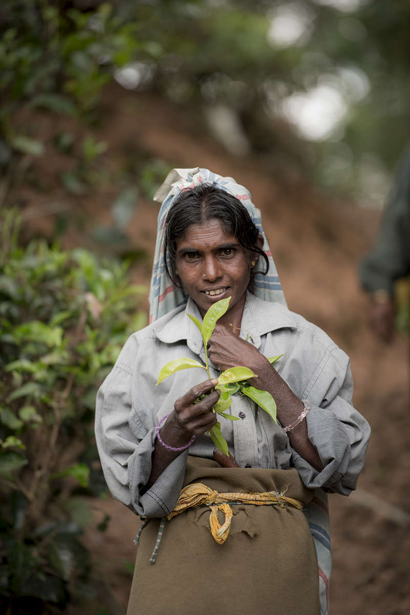 Tea Picker, Sri Lanka