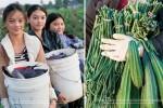 hmonga