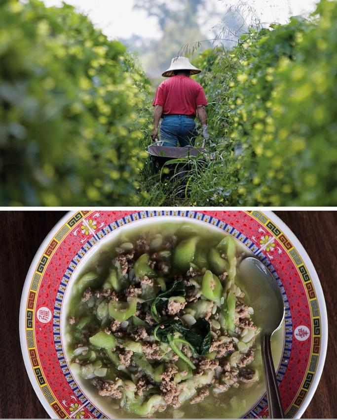 hmonglayout