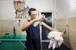Luciano - dog groomer - Cidade de Deus