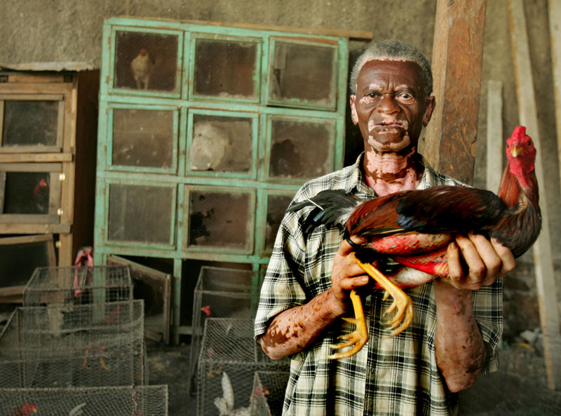 A man holds his cock fighter inside a ring in Port-au-Prince, Haiti.