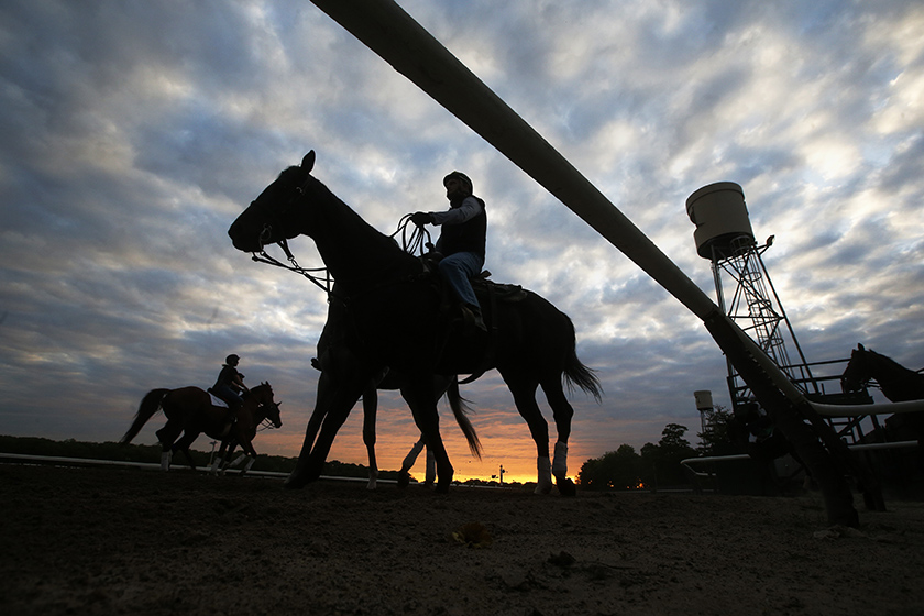 Horses are seen in silhouette making their way to the track for morning workouts at Belmont Park in Elmont, New York May 21, 2014. The Belmont Stakes will be host to California Chrome as he competes for the coveted triple crown at Belmont Park on June 7, 2014.  REUTERS/Shannon Stapleton  (UNITED STATES )