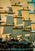CruiseShips-