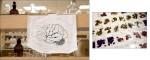 Research lab, brain specimen.Sun City, AZ