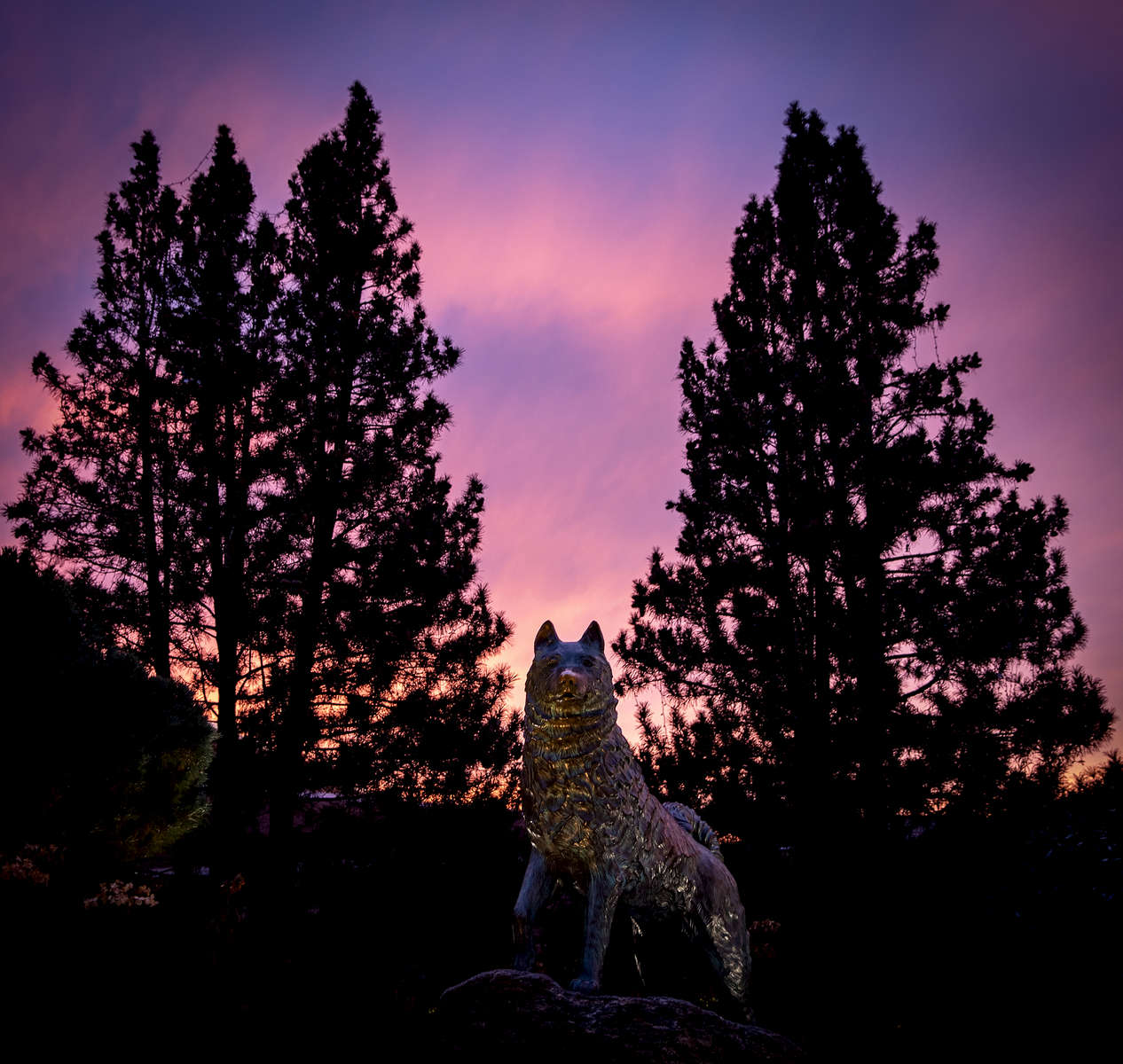Sun sets behind the Jonathan the Husky statue along Hillside Road on the UConn campus Tuesday, November 12, 2019 in Storrs.