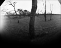 Wooded area in west Dallas, taken with a soda bottle camera. Five minute exposure on RC photo paper.