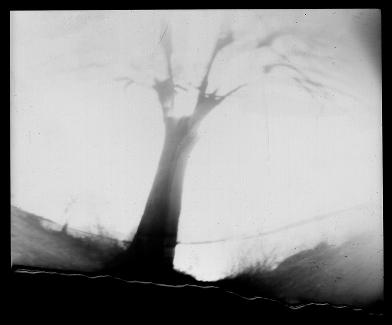 Backlit tree at White Rock Lake Park, taken on February 23, 2009 with tin can camera. Four minute, 15 second exposure on RC photo paper.