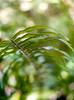 FernForest011