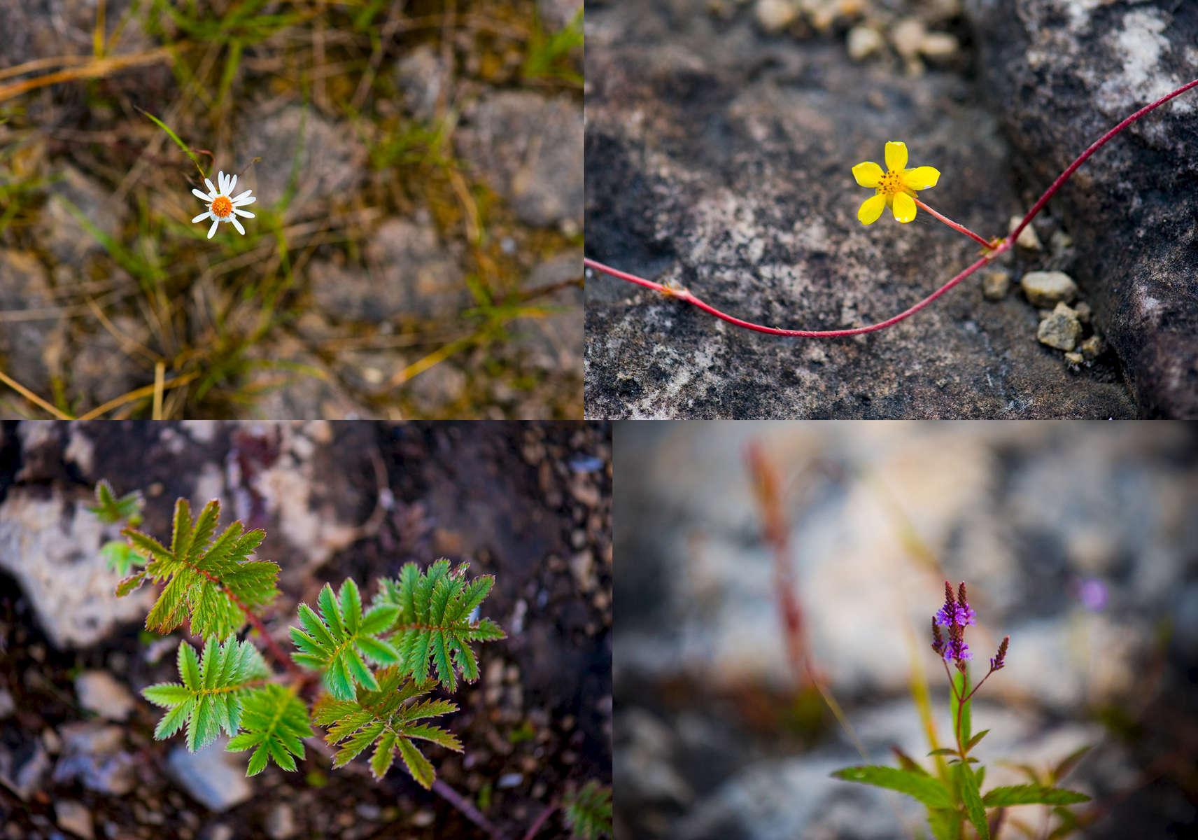 FlowerMult