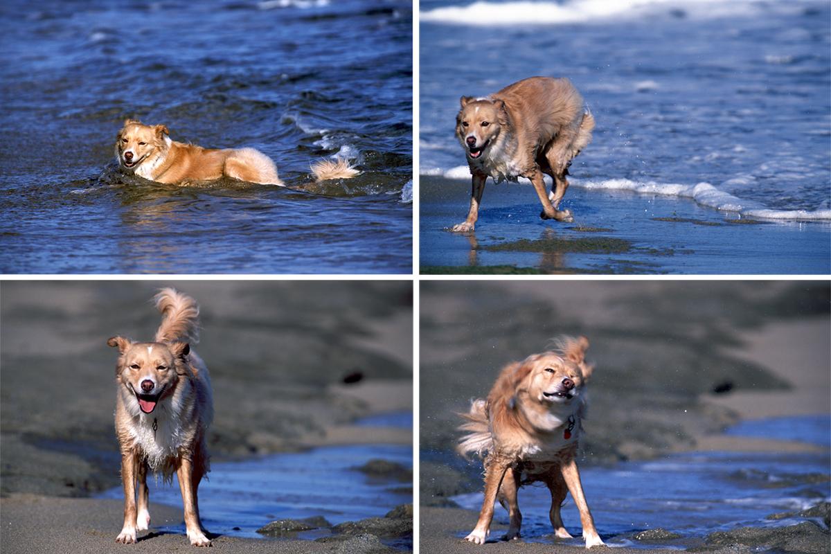 Dog_Story_006