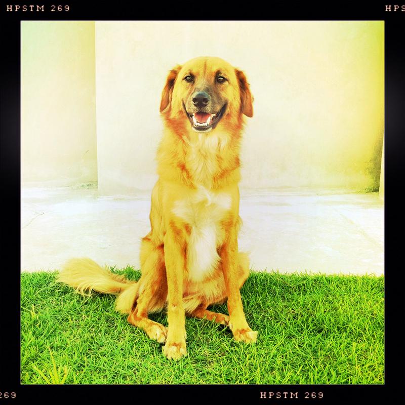 Dog_Story_010