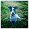 Dog_Story_014