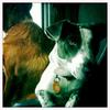 Dog_Story_017