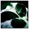Dog_Story_020