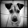 Dog_Story_021