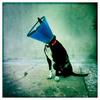 Dog_Story_022