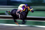 A horse and jockey speed down the stretch during a race at El Comandante Racetrack in Canovanas, Puerto Rico.  Client: El Comandante Racetrack