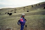 Nomad familyAt 6pm, Rhiten Gurung, the father, returns with his herd of yak that were 8 hours walk from the camp. Rhiten sell his yak for meat and wool. Depending on their size, the price varies between 20,000 and 40,000 rupees ($150-300).