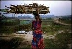Relief camp near Kokarajar, western Assam.Santhal woman carrying wood back to the camp.