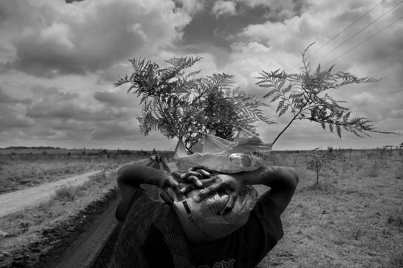 A slum youth carries saplings to a reforestation effort outside Nairobi as part of a community service project.