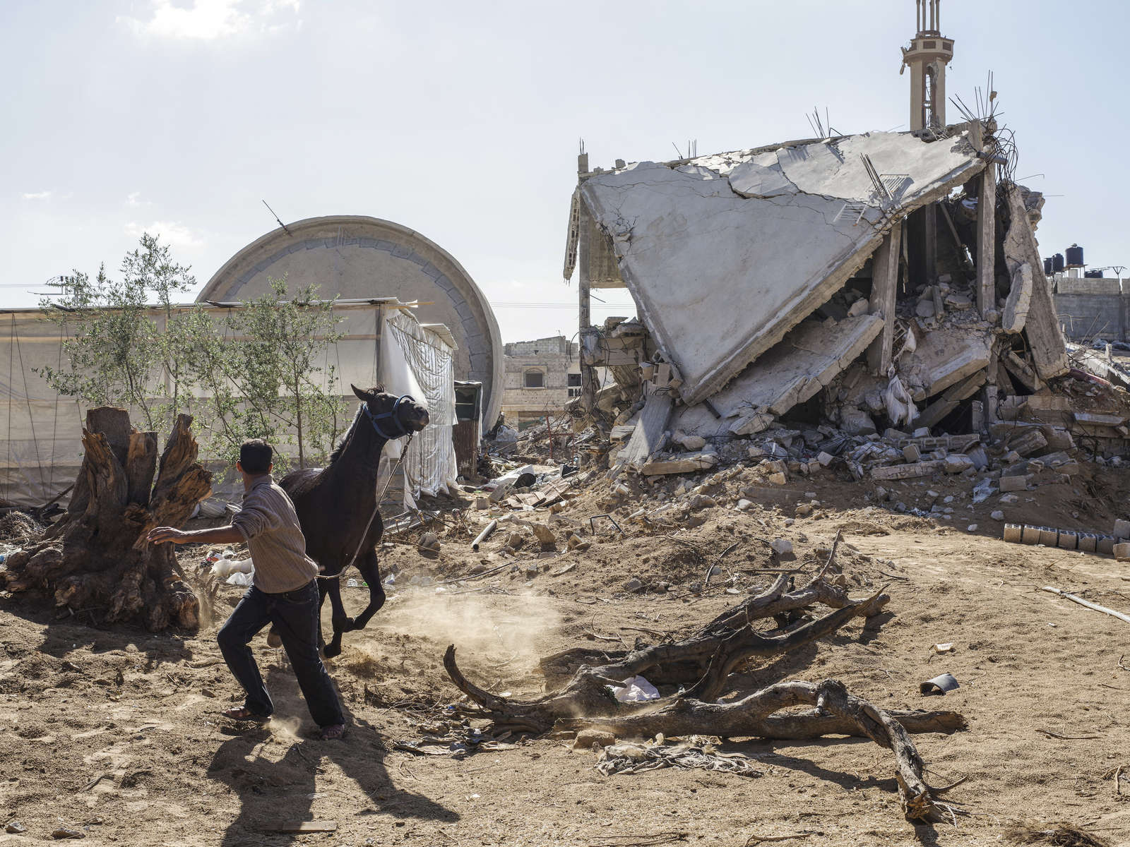 2014.  Gaza.  Palestine. A runaway horse by a destroyed mosque in southern Gaza.  Operation Protective Edge lasted from 8 July 2014 – 26 August 2014, killing 2,189 Palestinians of which 1,486 are believed to be civilians. 66 Israeli soldiers and 6 civilians were killed.  It's estimated that 4,564 rockets were fired at Israel by Palestinian militants.
