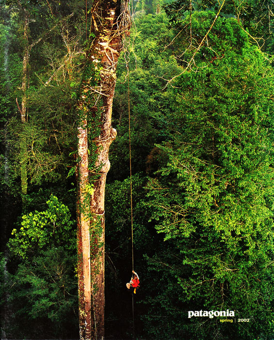 -- Orangutan researcher Cheryl Knott (Tim Laman's wife) climbs a rope into a giant rain forest tree in Borneo.