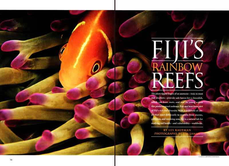 fiji s rainbow reefs national geographic articles