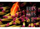 -- See the Fiji Reefs gallery under the PHOTO GALLERIES menu.