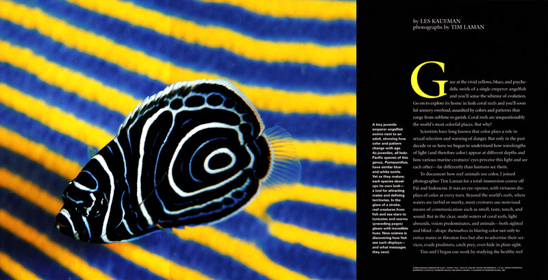 -- Opening gatefold side 2 - Coral Reef Color story