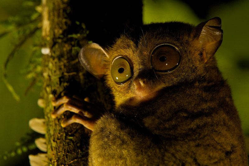 2010 Wildlife Photographer of the Year AwardsHighlyCommended - Gerald Durrell Award for Endangered Wildlife