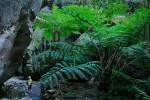 Carnarvon National Park, Australia