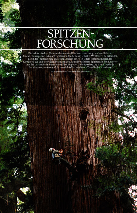 -- Tim Laman's image of researcher Steve Sillett climbing a giant Coast Redwood tree in California is the lead picture in this feature story on Redwoods and Steve's research.  The principle photographer for the story is James Balog.