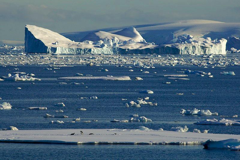 Adelie Penguins (Pygoscelis adeliae) on sea ice in Crystal Sound.