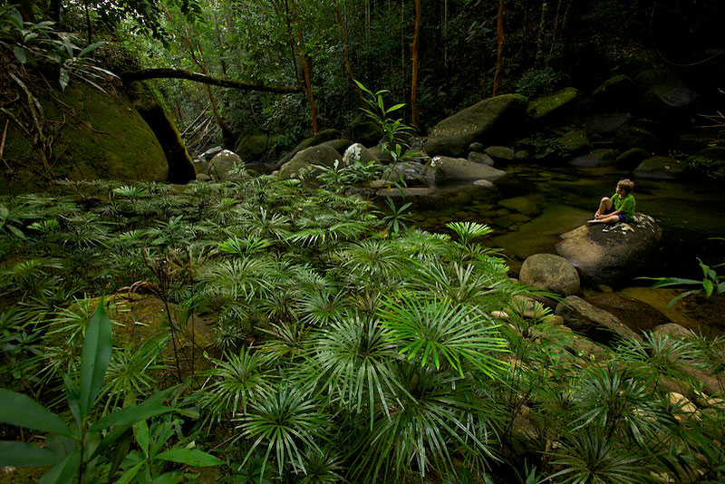 Gunung Palung National Park, Borneo, Indonesia