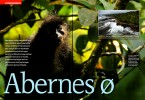 -- This story, in the danish version of Science Illustrated, is about the endangered monkeys of Bioko.