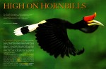 -  Tim wrote and photographed this article on asian hornbills.  -  Check out the entire text with Tim's photographs at the National Wildlife Federation's website.
