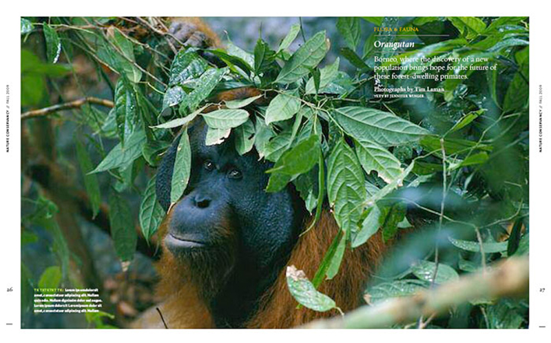 -- The Flora & Fauna section features four of Tim's orangutan images.