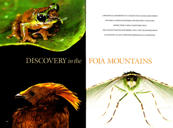 -- Tim's second expedition to the Foja Mountains in Indonesia resulted in this 14 page article showcasing 15 different species.-- Check out Tim's photographs in four different galleries on the NGM website.