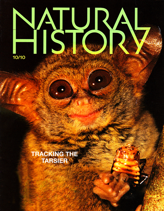--  Tim's image of a spectral tarsier was used on the cover for a story entitled {quote}Married to the Mob{quote}.  Tim's picture of a knobbed hornbill was also used in the story.