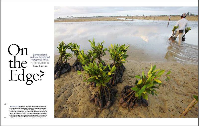 -- Tim has a photo essay as well as the opening picture for the mangrove feature in this summer issue.-- To see more of Tim's mangrove images visit his Mangrove photo gallery.