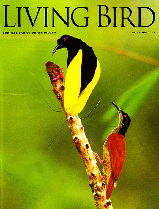 -- Tim's Birds of Paradise story made the cover of last fall's issue.