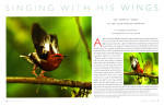 -- This story was shot for Kimberly Bostwick, curator of birds and mammals at the Cornell University Museum of Vertebrates.  She discovered the Club-winged Manakins use their wings to call for mates, instead of their voices.