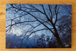 The signed aluminum print hangs in the gallery at Walden Pond State Reservation, Concord, Massachusetts.