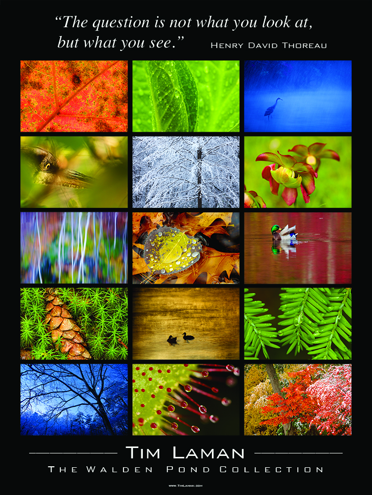 This poster of 15 of Tim's images from The Walden Pond Collection are paired with a quote from Henry David Thoreau, {quote}The question is not what you look at, but what you see{quote}.  Posters are available to purchase in The Shop at Walden Pond by the Thoreau Society or contact the office at Office@TimLaman.com.
