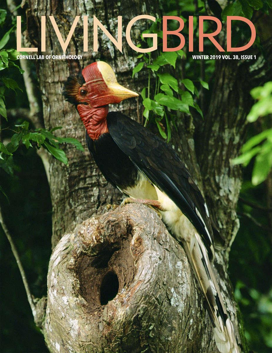 Living Bird Cover - Winter 2019