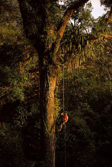Gunung Palung, Borneo